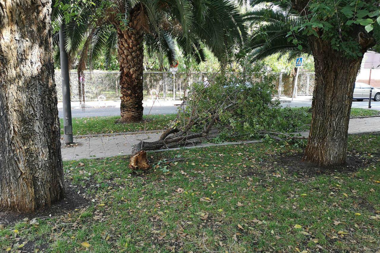 Podemos Getafe pide la mejora del mantenimiento del arbolado en nuestra ciudad