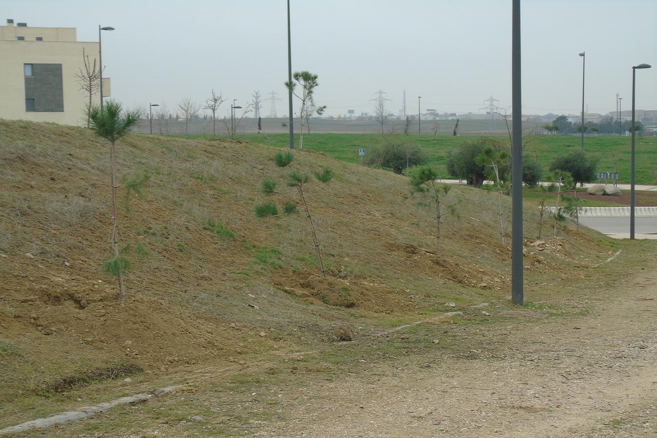 Podemos Getafe denuncia la mala praxis en las últimas plantaciones de árboles en el Parque de la Alhóndiga-Sector III