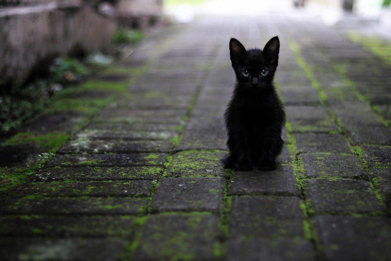 Podemos Getafe pide la puesta en marcha de un Programa de Gestión y Control de Colonias Felinas Urbanas en Getafe